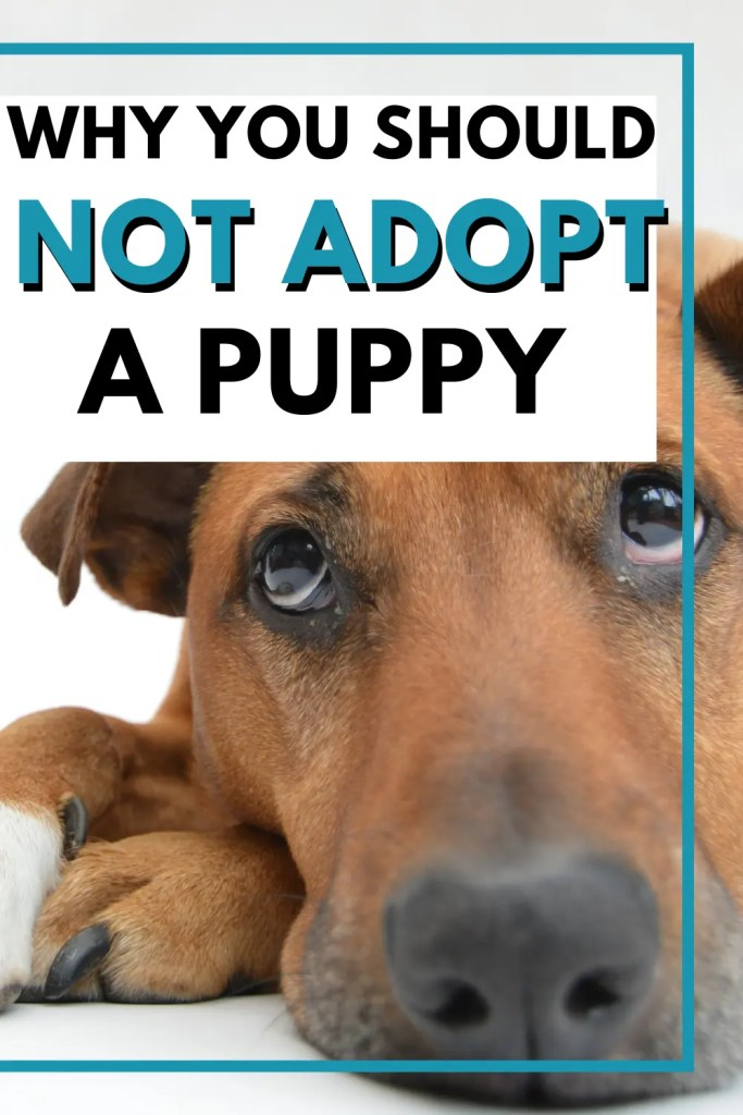 why should not adopt a puppy