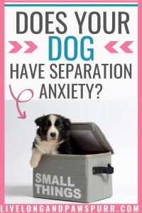 Does Your Dog Have Separation Anxiety? #dogs #puppy #separationanxiety #doghealth