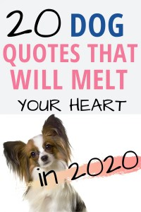 20 dog quotes that will melt your heart