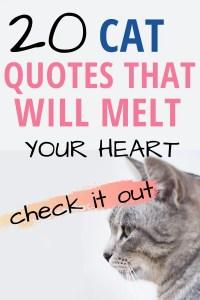 20 awesome cat quotes #catquotes #catquote