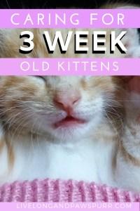 all about three week old kitten #kittencare #newkitten