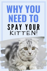 Why You Need to Spay Your Kitten #spay #spayandneuter