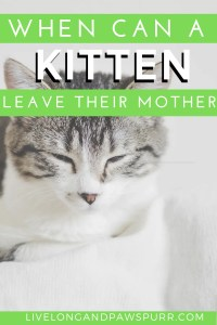 When can a kitten leave their mother #kittencare #kittenmother