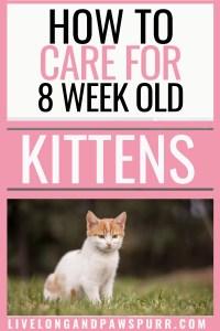 how to care for 8 week old kittens #8weekoldkittens #8weekold