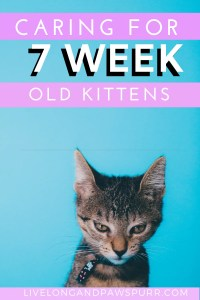 All About Seven Week Old Kittens #kittencare