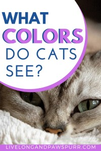 What Colors Do Cats See? #catquestions #cats #catfacts #cats101