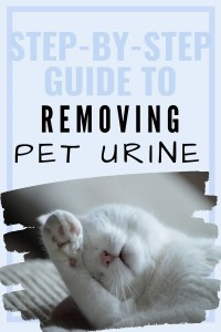 how to remove pet urine