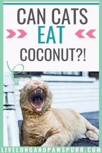 can cats eat coconut?