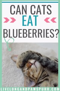 are blueberries safe for cats