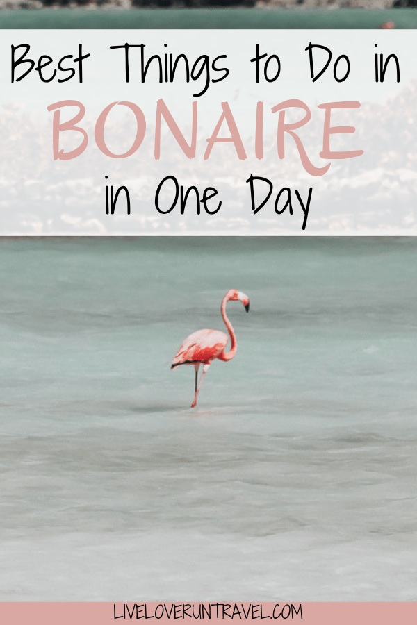 Flamingos, pink beaches and lakes, snorkeling, windsurfing and more - find all of the best things to do in Bonaire. Things to do in Bonaire | Bonaire itinerary | Bonaire island | Bonaire photography | Bonaire things to do | Bonaire cruise | Bonaire cruise port | Bonaire excursions | Kralendijk Bonaire | Bonaire beaches | best beaches Bonaire | Bonaire pink beach | Bonaire snorkeling | Bonaire salt flats