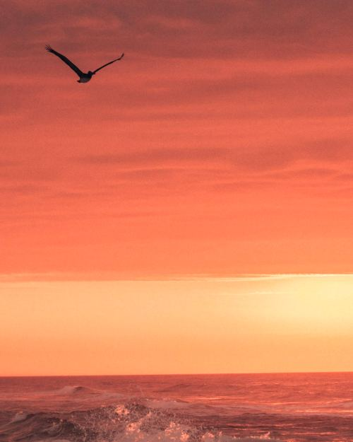 Pensacola beach sunrise with seagull