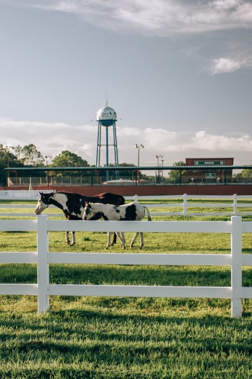 Horses at Westgate River Ranch, a Florida dude ranch offering glamping in Florida
