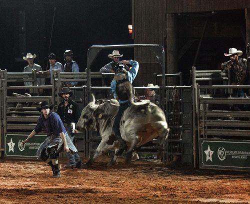 Bull riding at Florida rodeo at Westgate River Ranch
