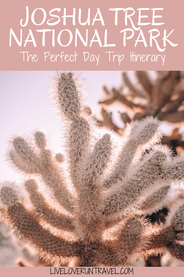 Cholla Cactus Garden in Joshua Tree National Park. Joshua Tree is the perfect stop on a road trip or for a one day stop, so here is a one day itinerary of all the spots you don't want to miss!
