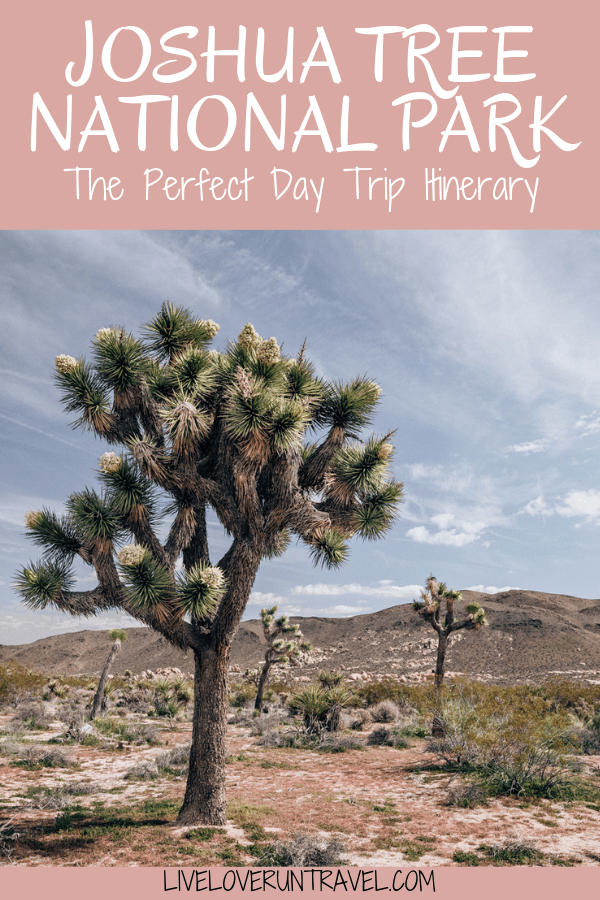 Joshua Trees in Joshua Tree National Park. Joshua Tree is the perfect stop on a road trip or for a one day stop, so here is a one day itinerary of all the spots you don't want to miss!