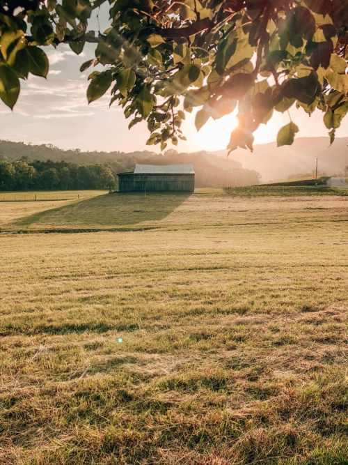 My grandma's farm in East Tennessee
