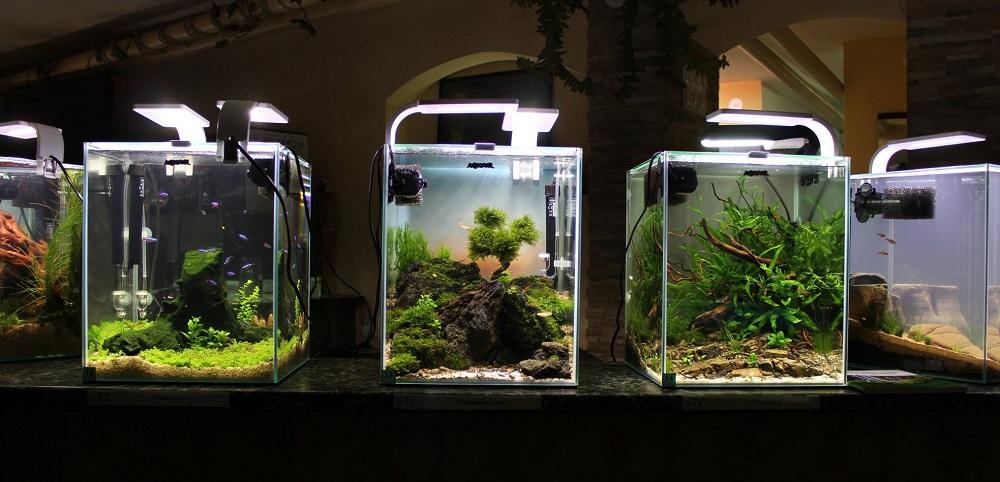 Нано-аквариум: Руководство к действию.