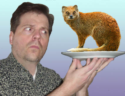 mongoose-on-my-plate