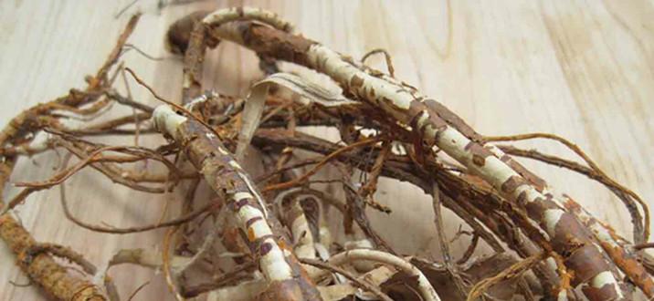 morus-alba-root-extract