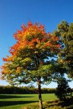 Sefton Park Oct 2015