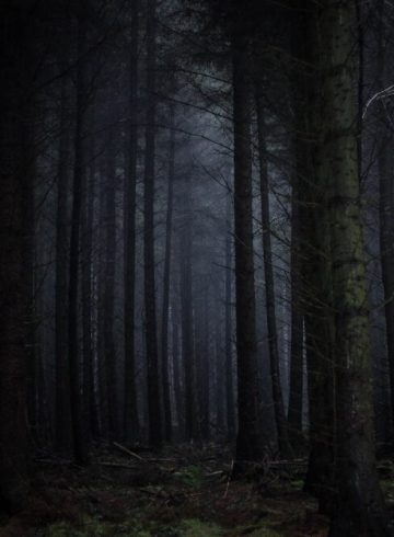 Halloween Woodland Trail Merseyside