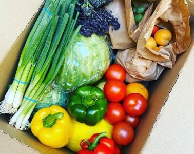 Green Vita Fruit and Vegetable Boxes