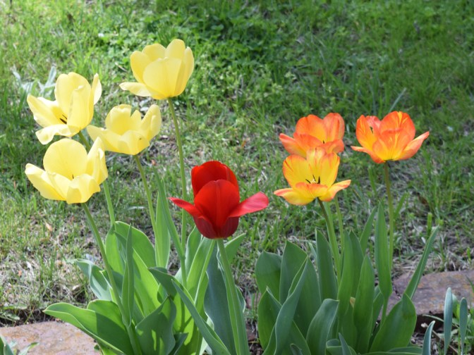 Flowers at Kenmore (9)