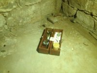 Dibbuk Box | WithAnEagle