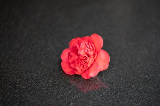 Image of a red flower on a marble slab