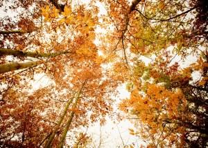 Fall foliage tree top photo