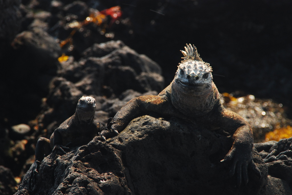 Galapagos Reptiles: From Real Life to the Big Screen