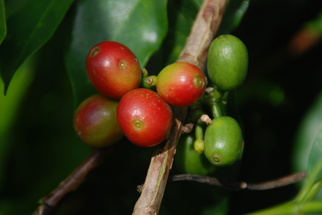 Photoblog: On a Coffee Plantation in Colombia