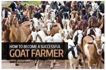goat_farmer