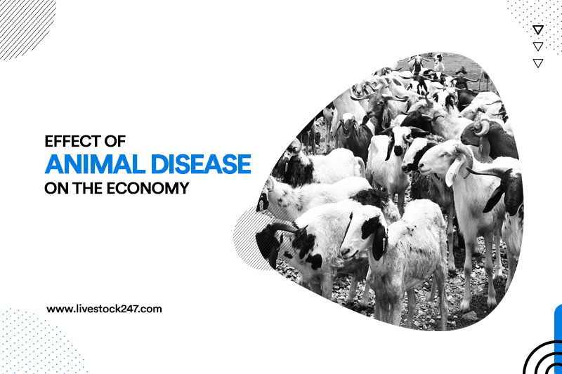 Effect of Animal Disease on the Economy