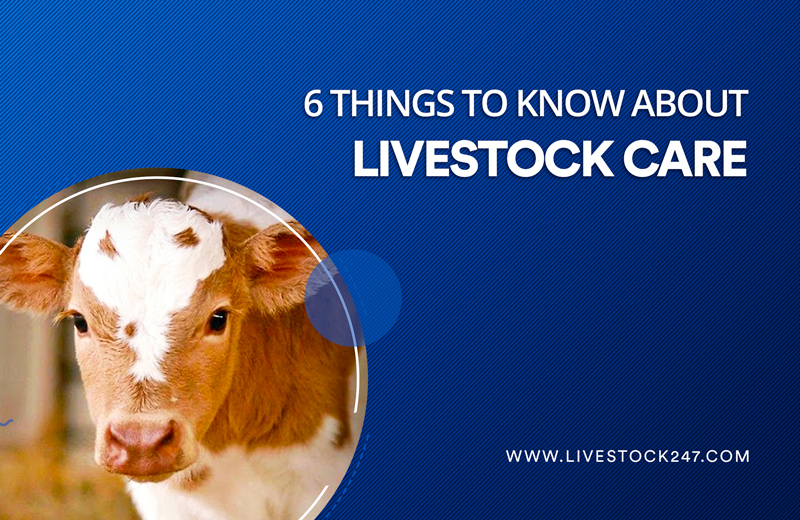 6 things to know about livestock care
