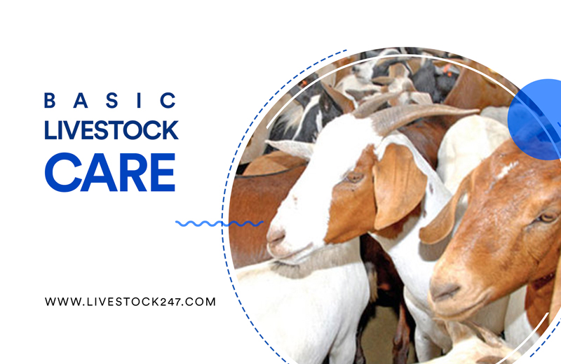 Basic Livestock Care