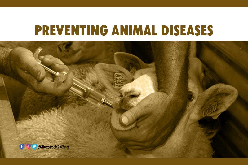 Preventing Animal Diseases