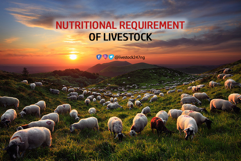 Nutritional Requirement of Livestock