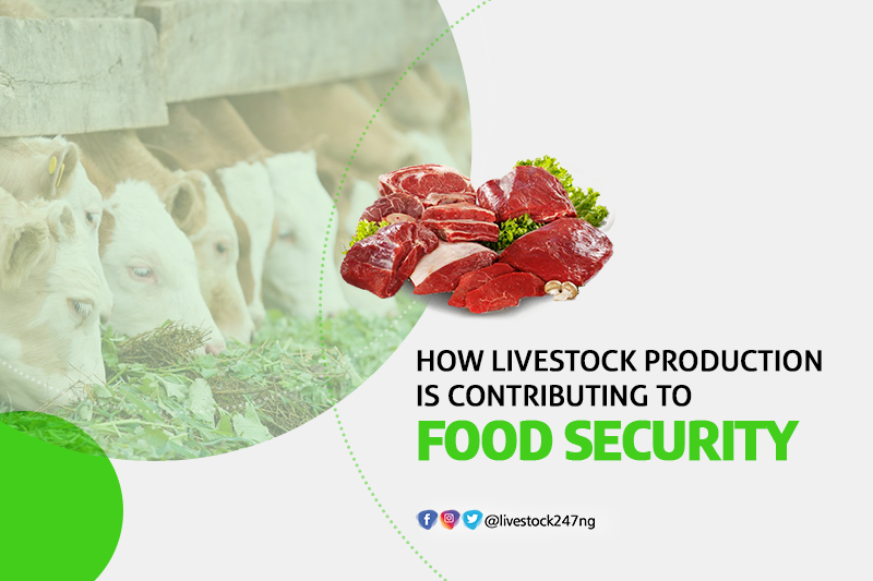 How livestock production is contributing to food security