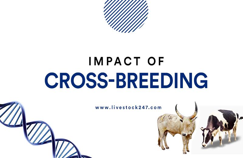 Impact of Cross – Breeding