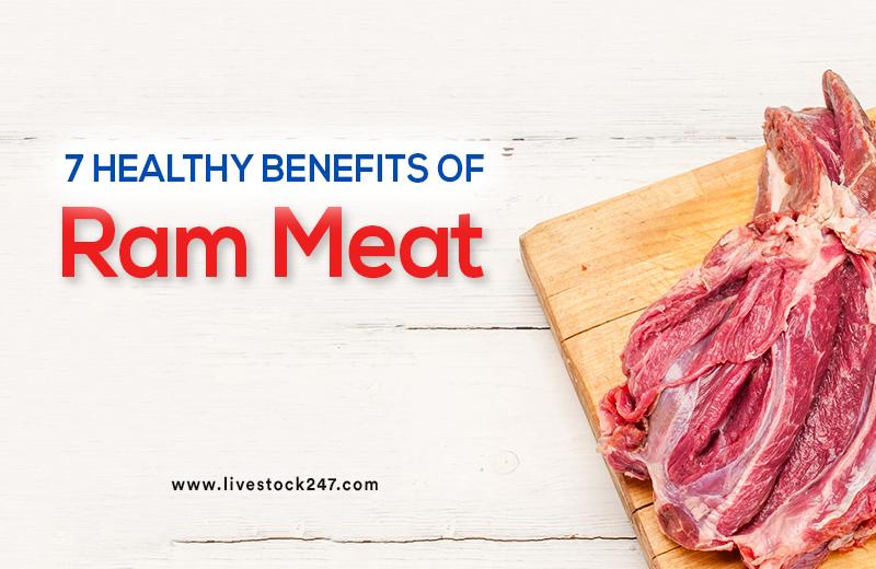 7 Healthy Benefits of Ram Meat
