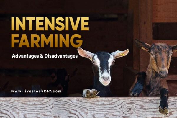 Intensive Farming:- Advantages & Disadvantages