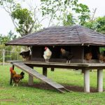 Chicken Coop Ramp How To Build Livestock At Home