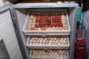 Egg Incubators 101