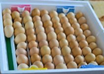 Everything You Need to Know About Eggs for Hatching