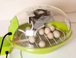 Modern Egg Incubator