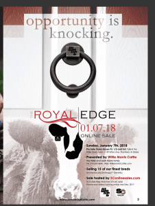 The Royal Edge @ Show Circuit Online Sales