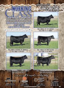 Working Class Female Sale @ Summit Farms Facility | Hubbard | Iowa | United States