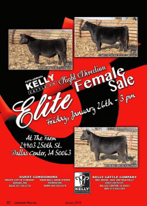 Kelly Cattle Co. Right Direction Female Sale @ At the farm | Dallas Center | Iowa | United States