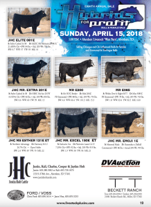 Hybrids for Profit bull and female sale @ Aberdeen Livestock | Aberdeen | South Dakota | United States